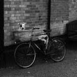 Dog on a Bike: I met this dog outside a village shop. Didn't like it's photo being taken. Kept growling at me. Maybe trying to protect it's owner's bike.