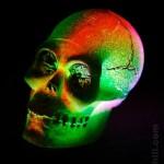 Skull: Skull. A friend of mine