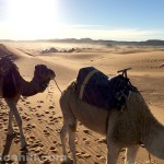 Camp And Camels: Early morning in the Sahara