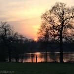 Watching Herons: Young man watching a Heron take flight at sunset