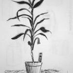 Indoor Plant. 19880916