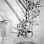 Climbing Plant. 19930321