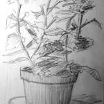 Pot Plant 19951230